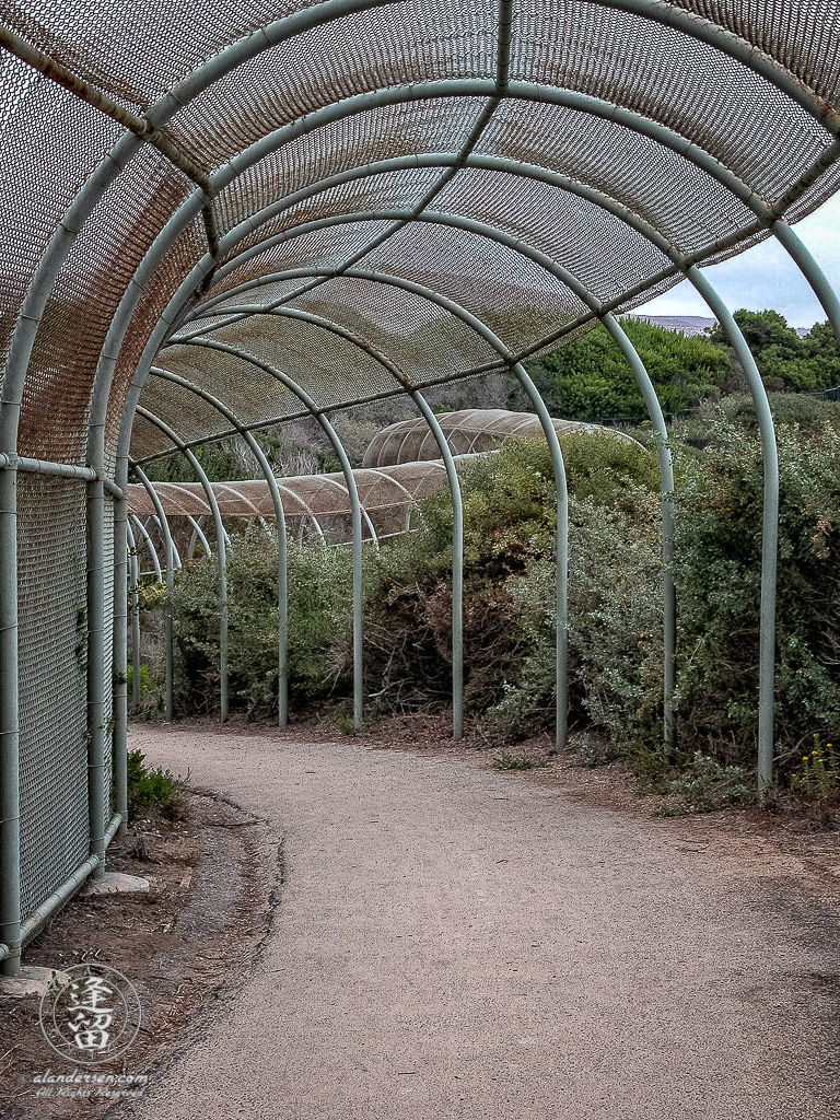 Protective chain link fence along Crystal Cove Trail.