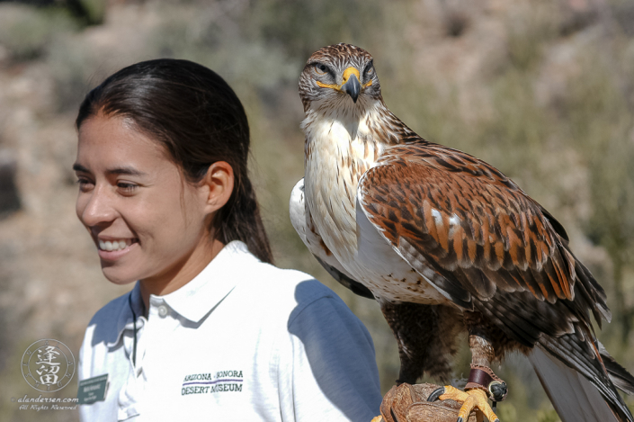 Docent and Trainer Ms Marta Hernandez does question and answer session regarding the behavioral characteristics Ferrugionous Hawk (Buteo regalis).