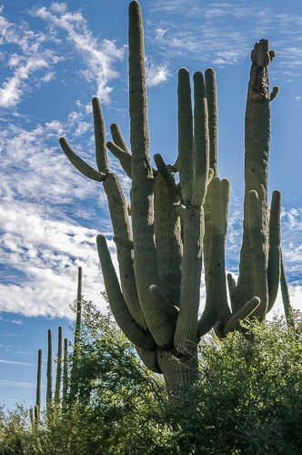 Cover image for Al Andersen Photogaphy's Cactus & Succulent Gallery.