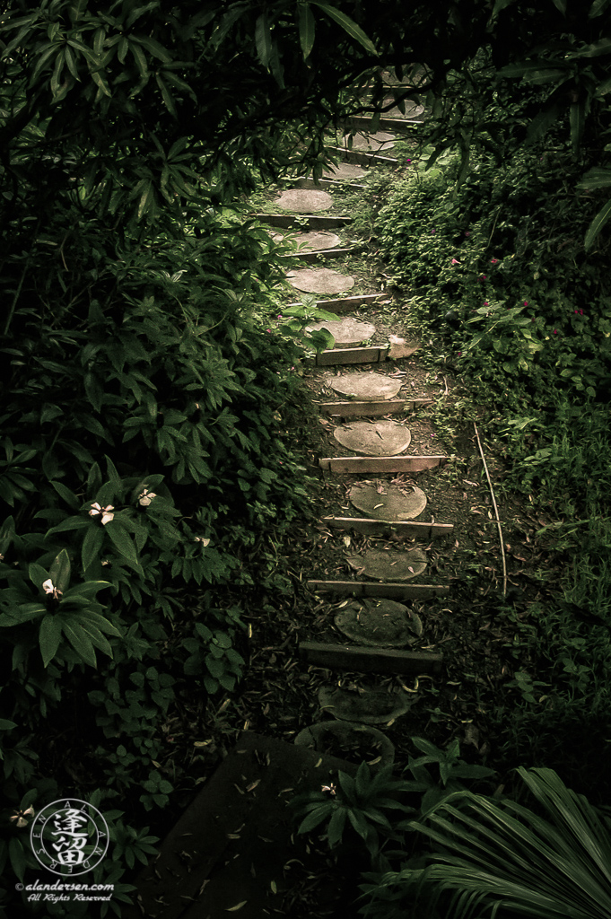 Sunlit stepping stones provide a dry path through a dark tropical forest.