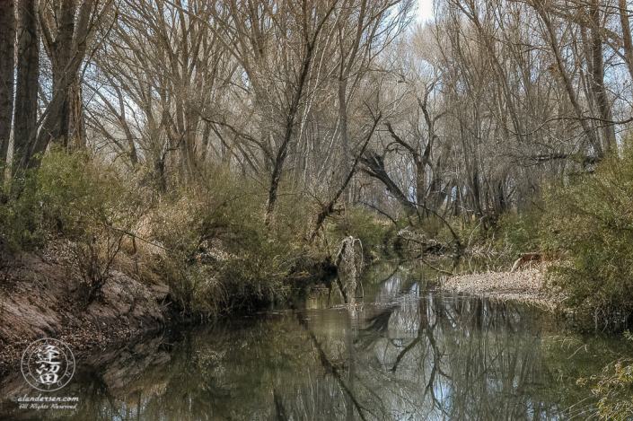 Spooky-looking dead Cottonwood tree on one of the turns on the San Pedro River.