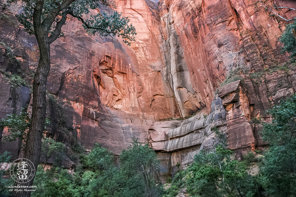 Red sandstone cliffs of the Temple Of Sinawava in Zion National Park.
