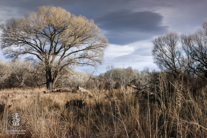 Dark clouds congregate over grasslands and Cottonwoods trees on a Winter day.