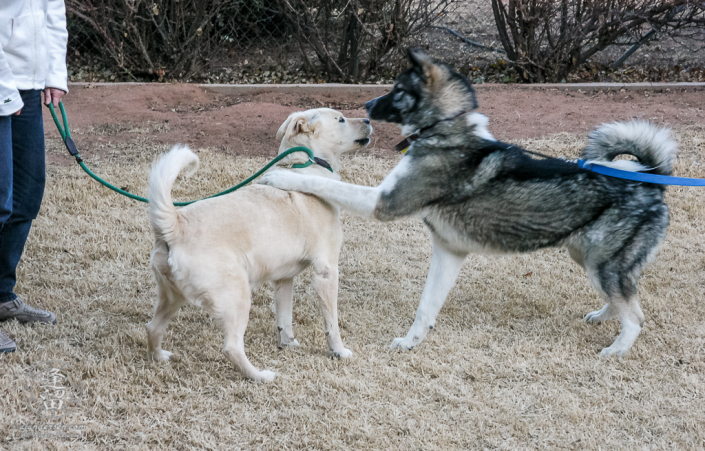 Hachi meets Shiloh for the very first time.