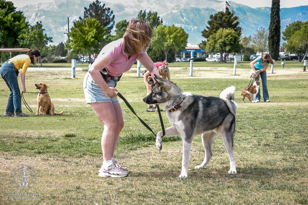 Lori trying to get Hachi to focus better during his canine obedience class.