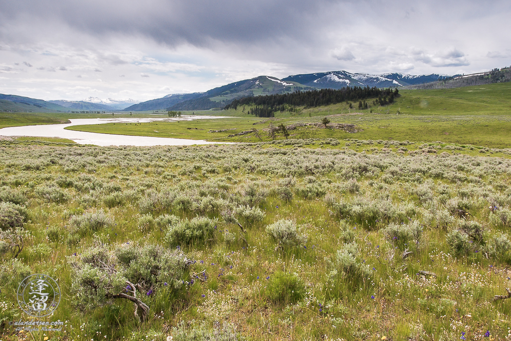 Muddy river winding through grassland and sagebrush in Yellowstone National Park's Lamar Valley.