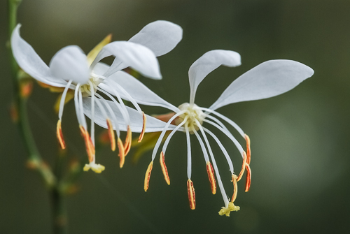 Cover image for Al Andersen Photogaphy's Wildflower Gallery.