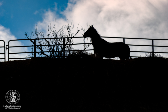 Horse in profile silhouette behind coral fence.