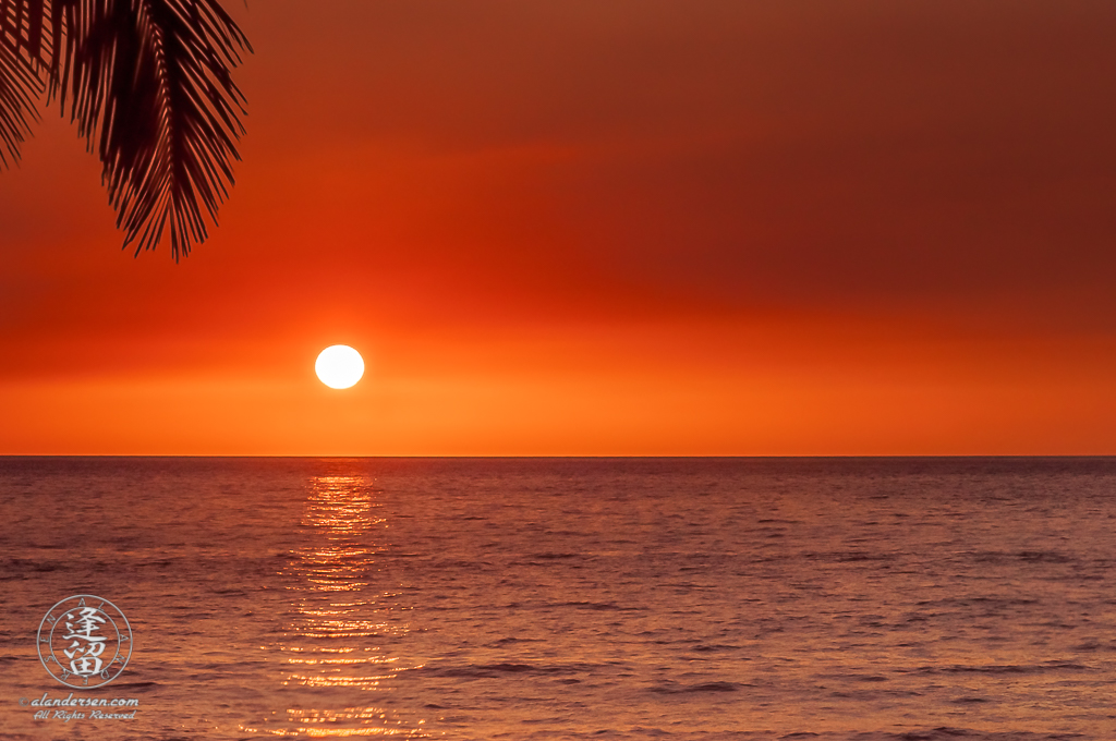 Minimalistic composition of elements comprising a tropical sunset tinted orange.