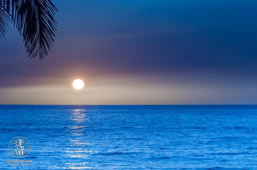 Minimalistic composition of elements comprising a tropical sunset tinted blue.