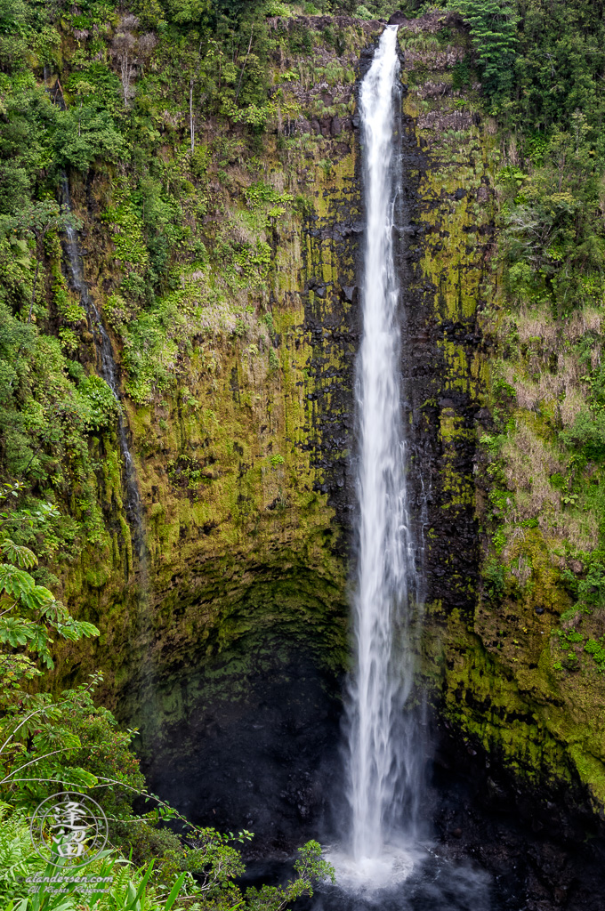 Akaka Falls free-falling 420 feet from green tropical forest into black rocky pool.