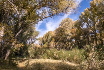 Cover image for Al Andersen Photography's San Pedro Riparian National Conservation Area Gallery.