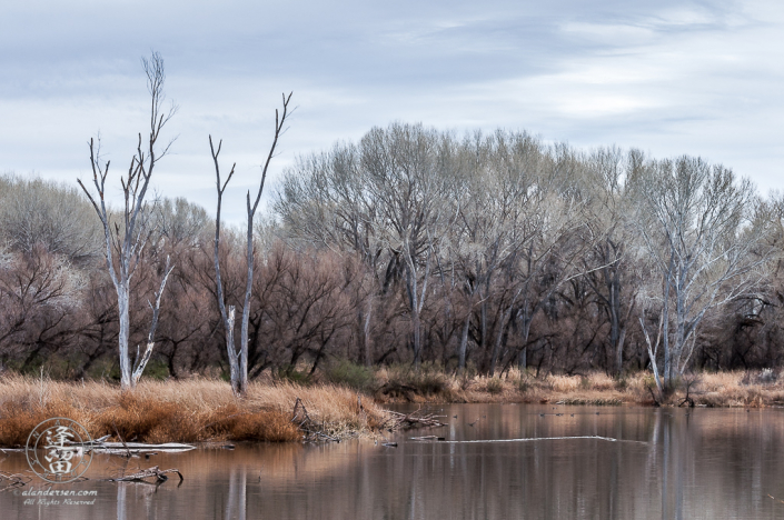 An overcast day at Kingfisher Pond.