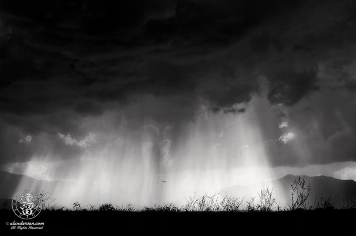 Monsoon storm sweeping across a desert valley.