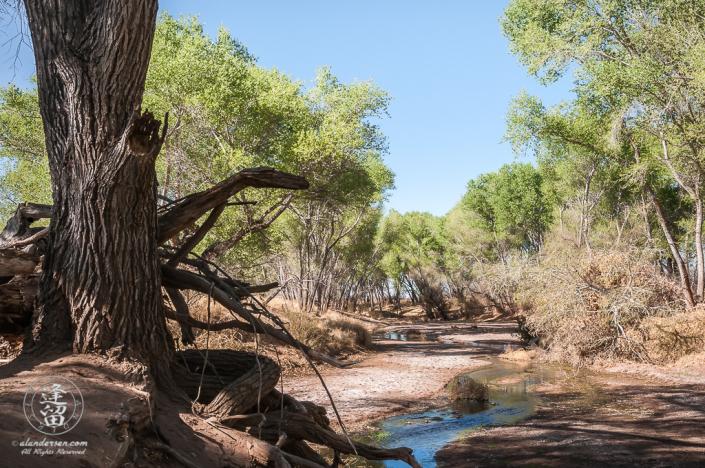 San Pedro River watercourse winding through the desert.