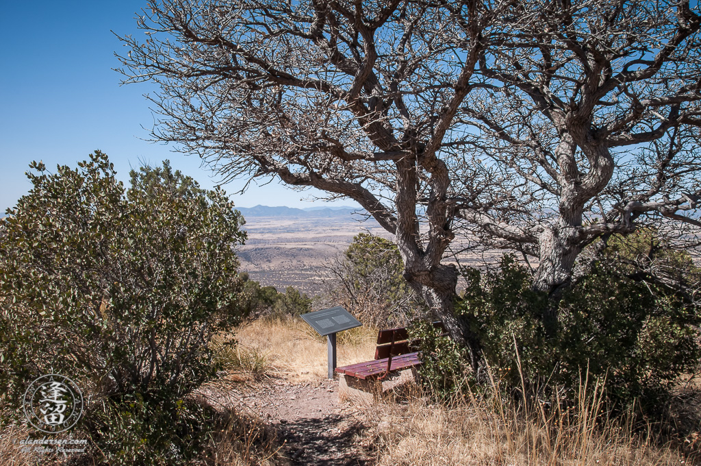 Wooden bench beneath leafless oak tree on mountainside.