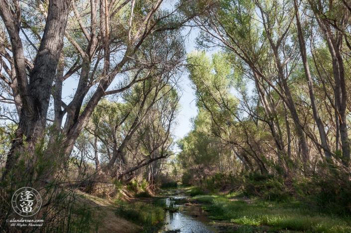 green banks of San Pedro River on early May morning.