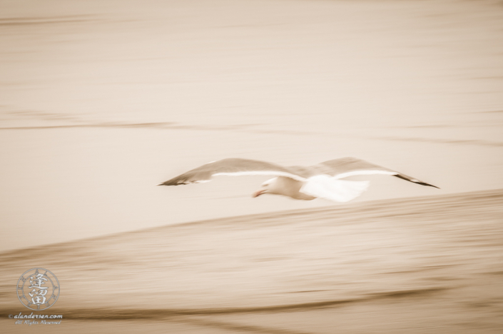 Seagull skimming above the ocean surf.