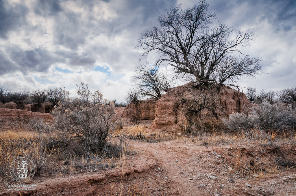 Bare mesquite tree isolated atop an eroded hill beneath dark brooding clouds.