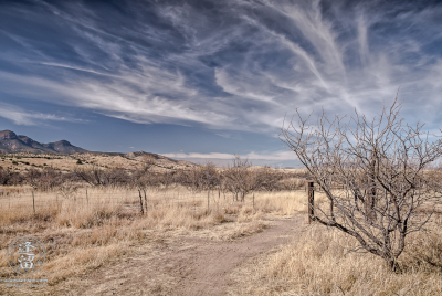 Desert grassland beneath Cirrus cloud tendrils in blue sky.