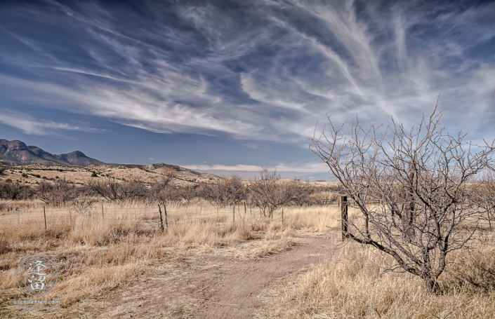 Desert grassland beneath Cirrus cloud tendrils in blue sky.