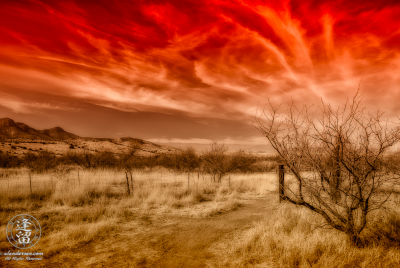 Desert grassland beneath Cirrus cloud tendrils in red-toned sky.