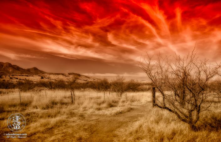 Desert grassland beneath Cirrus cloud tendrils in red-toned sky.