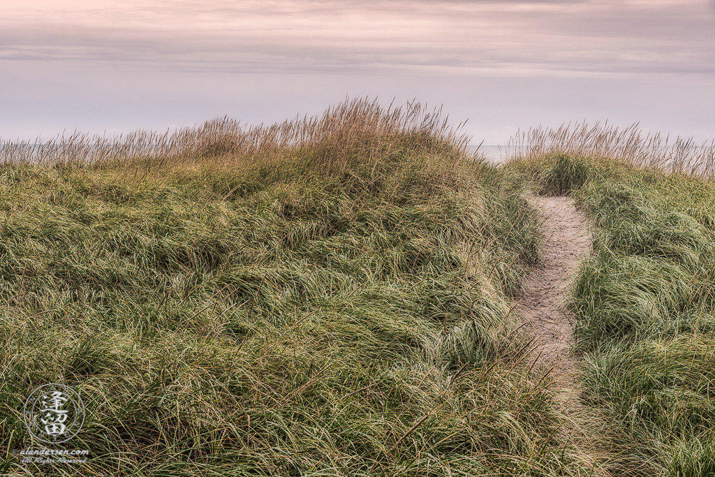 Sandy path winding its way through tall green dune grasses to shoreline at Del Rey Beach State Recreation Site in Warrenton, Oregon.