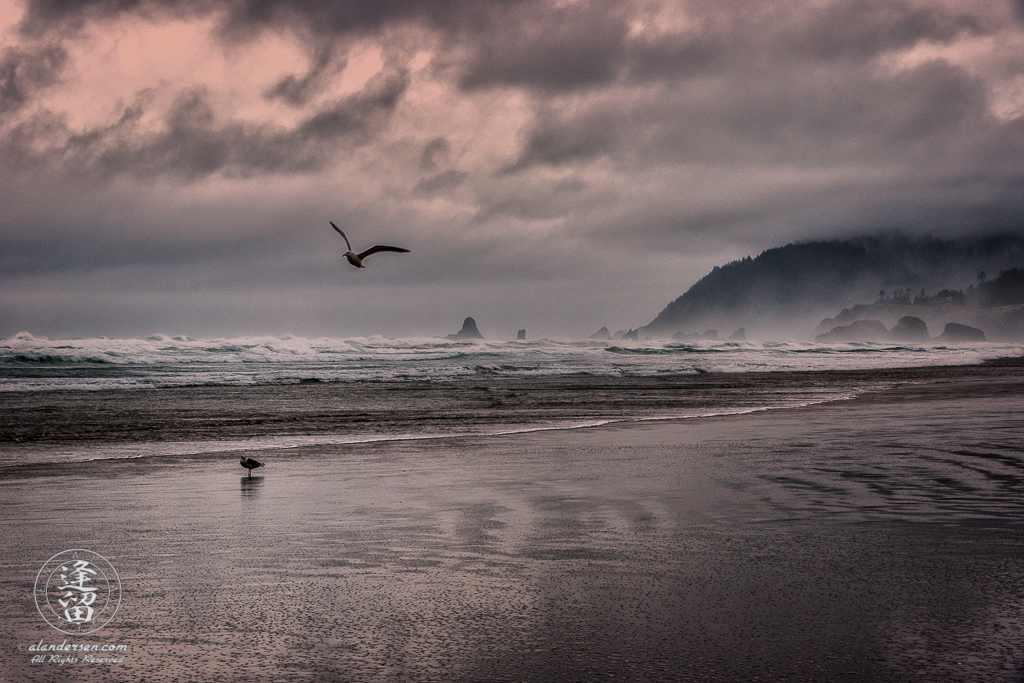 A stormy day at Cannon Beach with ominous clouds looking down on wind-whipped waves crashing on the ragged sea stacks near Ecola State Park, and sand ripples racing across a wet beach inhabited by two nonchalant sea gulls.