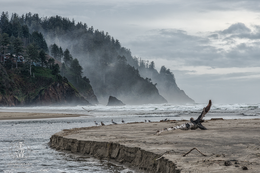 A water channel cuts through a sandbar lined with seagulls before the misty hills at Proposal Rock in Neskowin, Oregon.