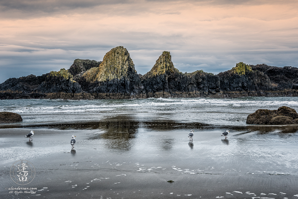 Seagulls walking along beach on cloudy morning before jagged rock formations at Seal Rock State Wayside, Oregon.