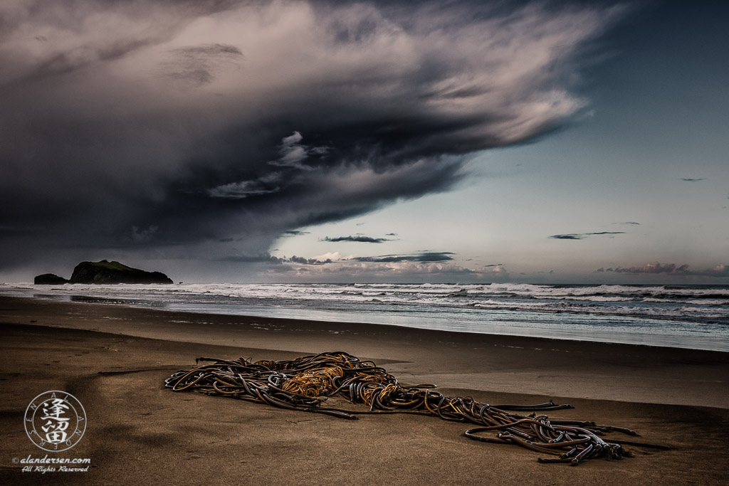 Ominous storm clouds brood over clump of twisted kelp stranded on beach.