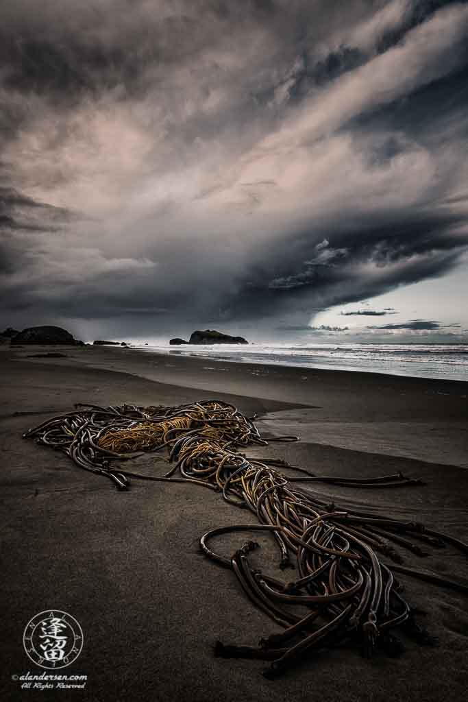 Ominous storm clouds brood over a clump of twisted kelp stranded on the beach at Bandon, Oregon.