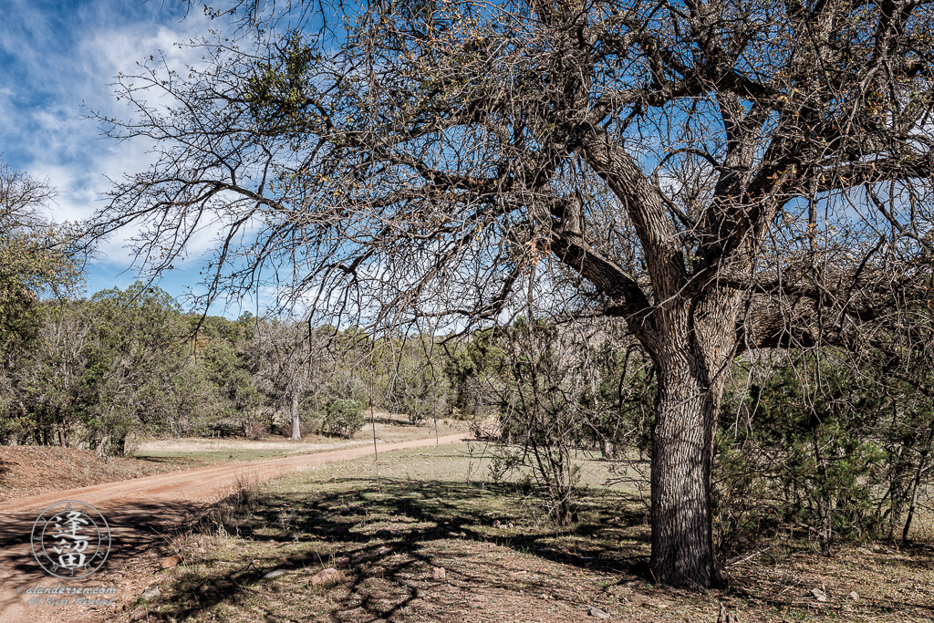 Large oak tree standing on side of dirt road near Camp Rucker in Arizona.