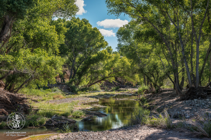Morning sunlight bathes Cottonwoods and Willows on San Pedro River near Charleston, Arizona.