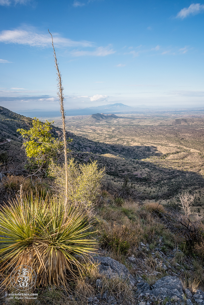 A Sotol framing the view into Sonora Mexico from a ridge on the Huachuca Mountains of Southeastern Arizona.