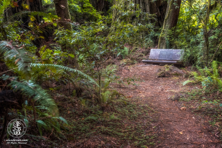 Secluded bench off Leiffer Loop Trail at Jedediah Smith Redwood State Park in Northern California.