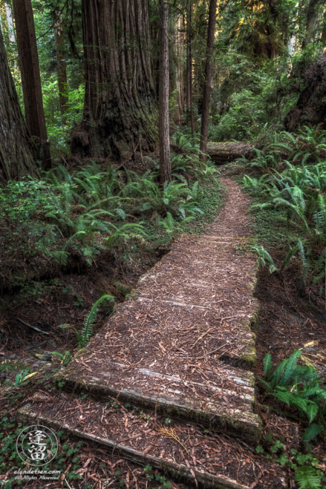 Boardwalk across gully on Leiffer Loop Trail at Jedediah Smith Redwood State Park in Northern California.