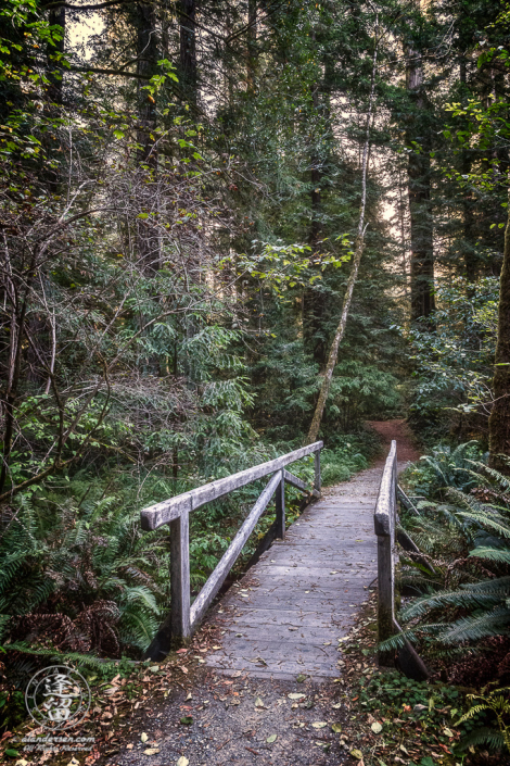 Small wooden bridge across creek on Leiffer Loop Trail at Jedediah Smith Redwood State Park in Northern California.
