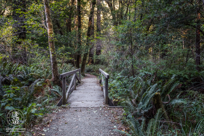 A small wooden provides dry safe access across a creek on the Leiffer Loop Trail at Jedediah Smith Redwood State Park, part of the Redwood National And State Parks, near Crescent City in Northern California.