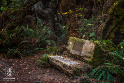 Rustic log bench on Leiffer Loop Trail at Jedediah Smith Redwood State Park in Northern California.