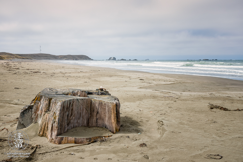 A stump from a Redwood tree on Kellog Beach north of Crescent City in Northern California.