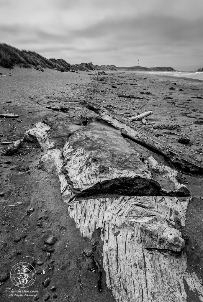 Portion of large Redwood tree buried in sand at Kellog Beach just North of Crescent City in Northern California.