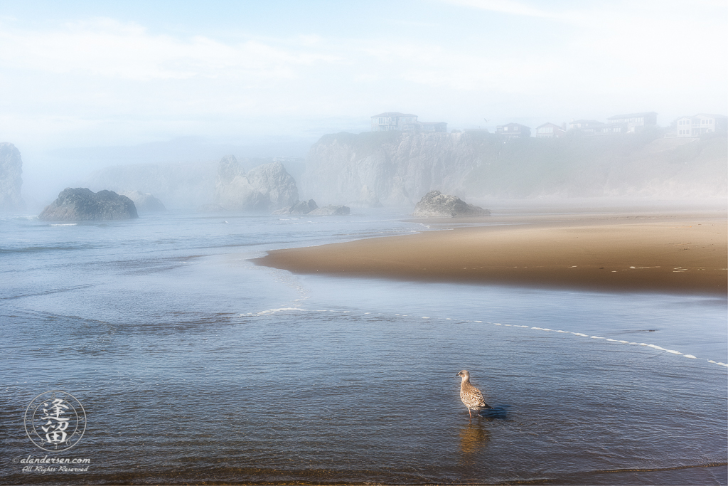 Seagull and cliffside homes peek through mist during foggy afternoon near the Face Rock State Scenic Viewpoint in Bandon, Oregon.