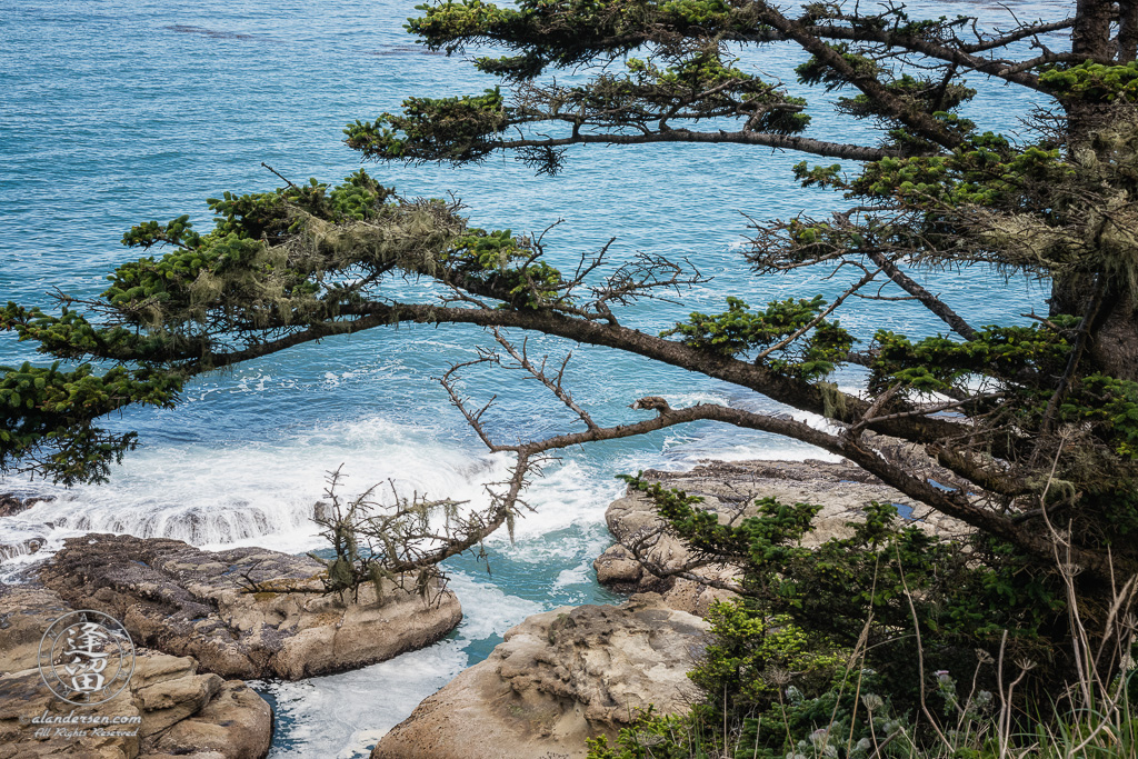 A scenic view from the top of the short North Cove Trail of waves washing over the rocks below at Cape Arago State Park in Oregon.