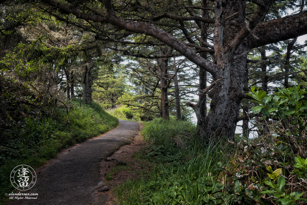 Paved trail winding under the trees on North Cove Trail at Cape Arago State Park in Oregon.