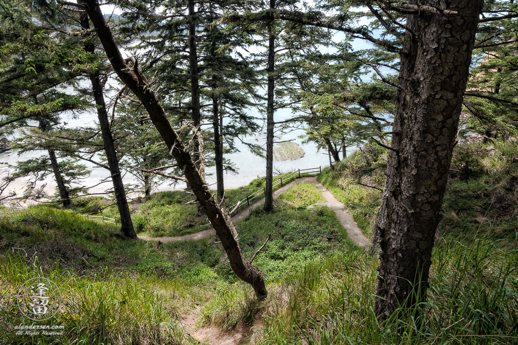 View of looking down from steep, but short, South Cove Trail weaving through pines and grass at Cape Arago in Oregon.