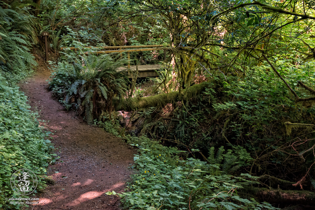 The Hidden Creek Trail H6 bridge at the South Slough National Estuarine Research Reserve in Charleston, Oregon.