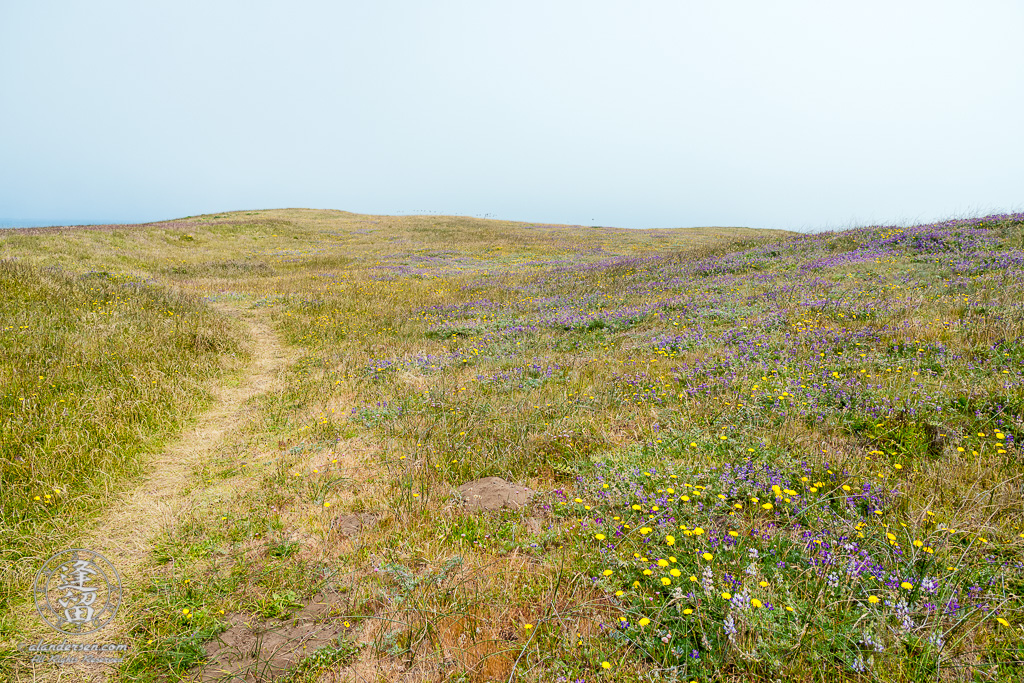 One of dozens of grassy trails that criss-cross the area around Point St Geroge outside of Crescent City in Northern California.