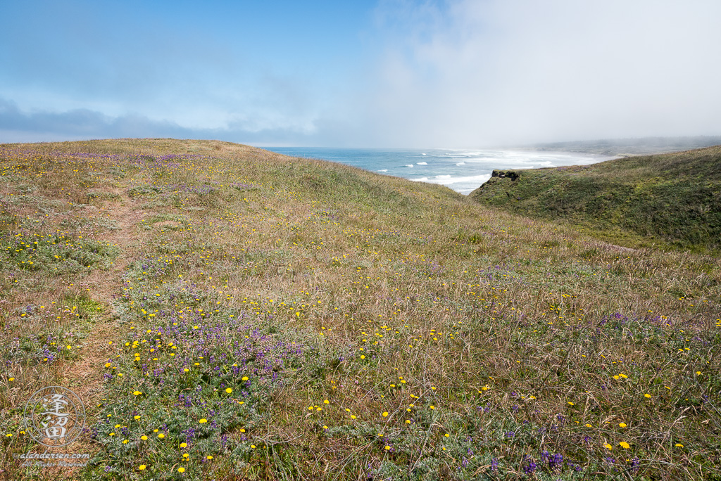 One of the dozens of grassy trails that criss-cross the area around Point St Geroge outside of Crescent City in Northern California.